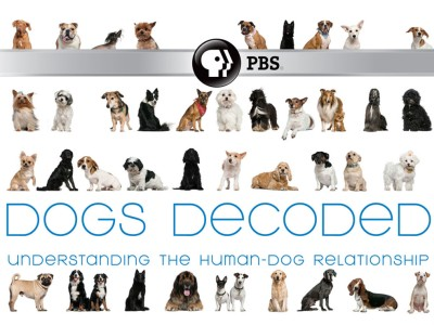 dogs decoded