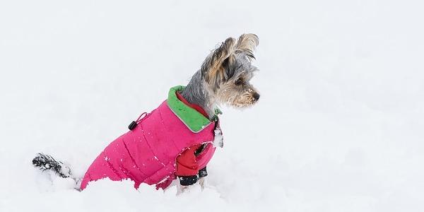 dogs winter jackets