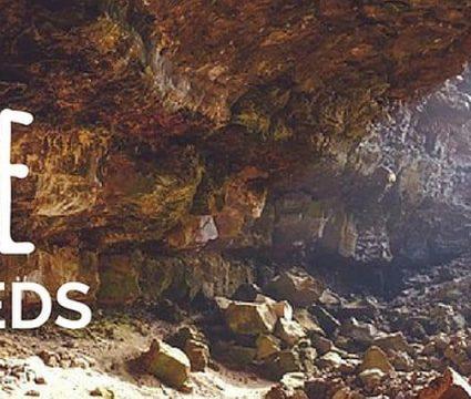 best-cave-dog-beds