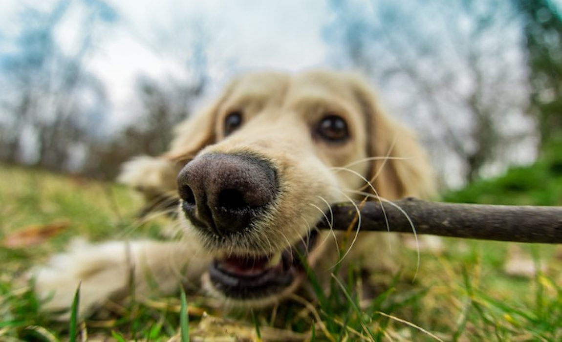 5 Best Anti-Chew Dog Sprays: Put a Stop to Your Pup's Chewing!
