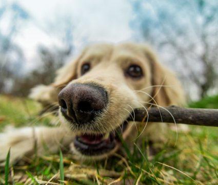best dog chew spray