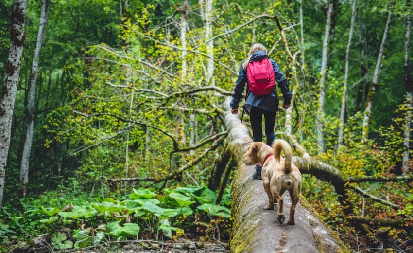 best dogs for hiking