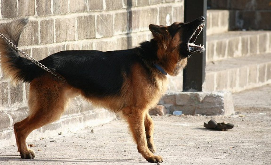14 Best Dogs for Protection: What Makes a Great Guard Dog & Why?