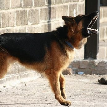 best dogs for security