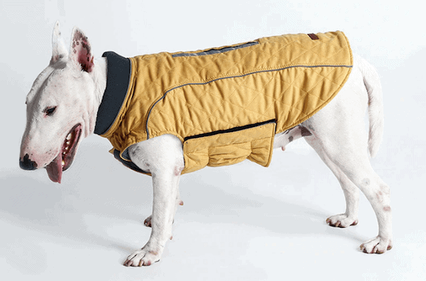 cool-weather-canine-coat