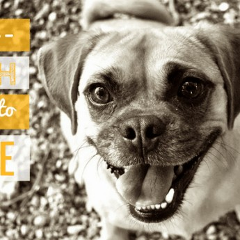 how to teach a dog to smile