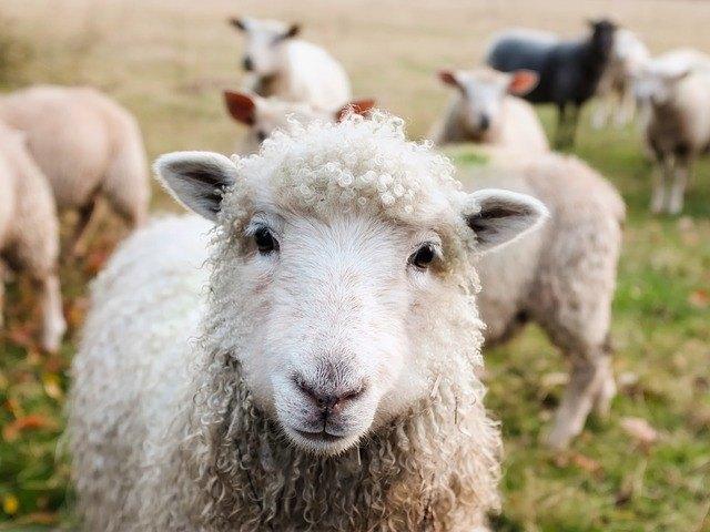 lamb dog food reviews
