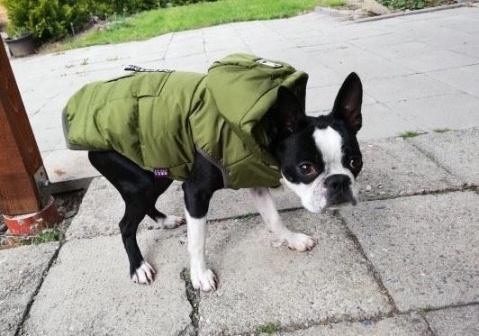 petite-pooch-puufer-jacket