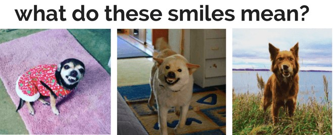 teach dog to smile