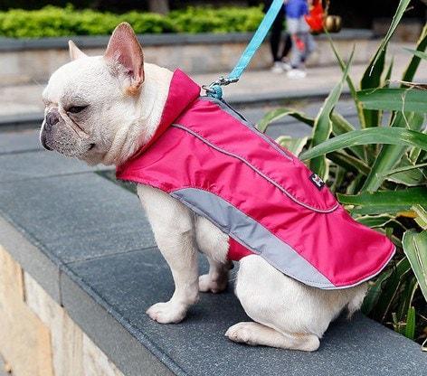 warm waterproof canine coat