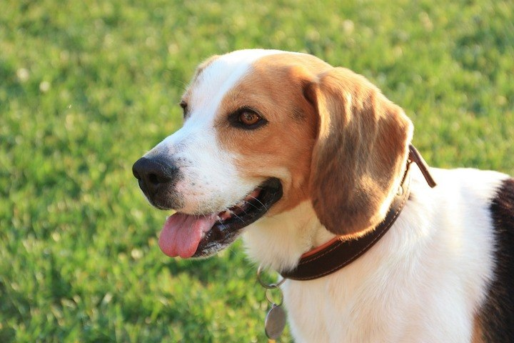 9 Best (And Worst) Dogs For First-Time Owners!