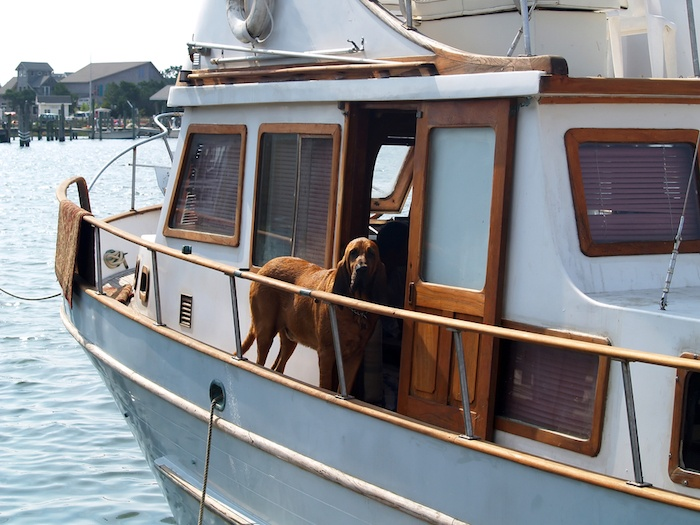 best boat ramps for dogs