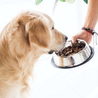 best-budget-dog-food