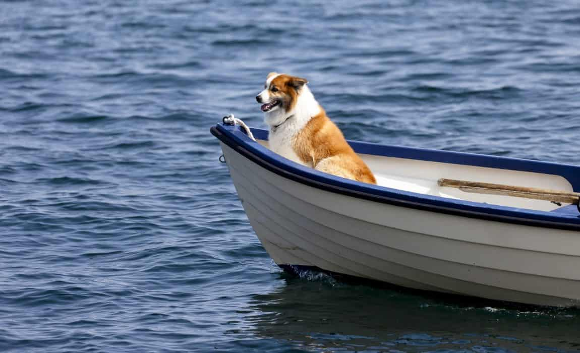 best dog boat ramps