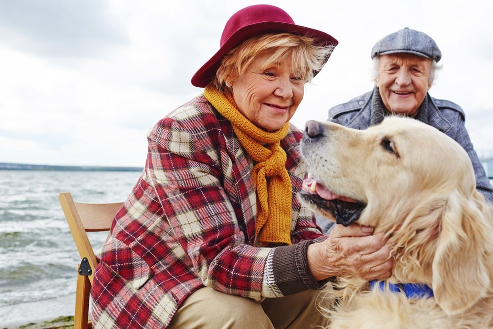 Best Companion Dog Breeds Elderly