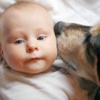 best dogs with babies