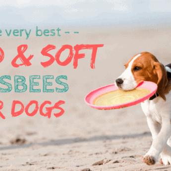 best flying disks for dogs