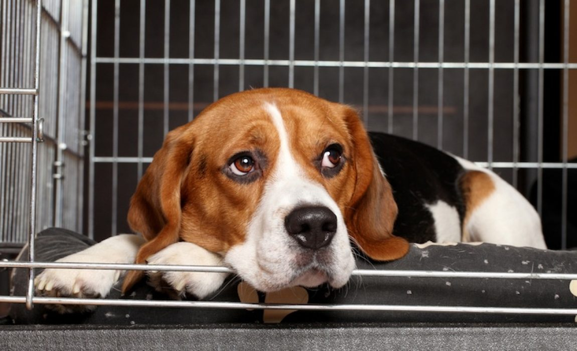 best wire dog crates
