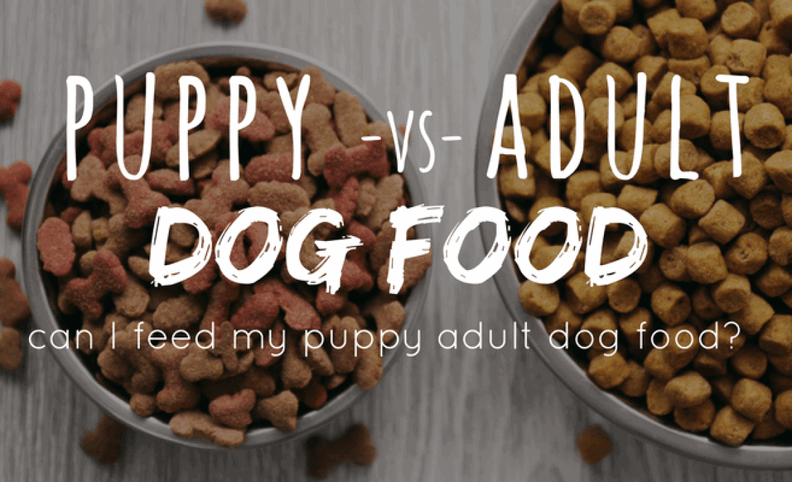 Can Puppies Eat Adult Dog Food Puppy Vs Dog Nutrition What You Need To Know