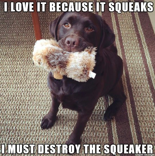 dog love squeaky toy