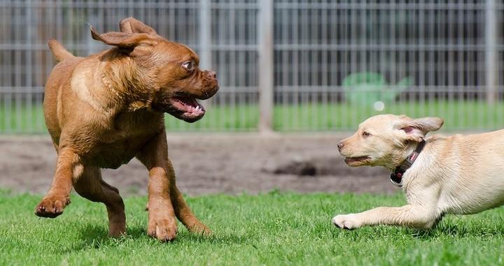 dog park play