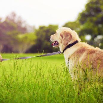 how long should I walk my dog for