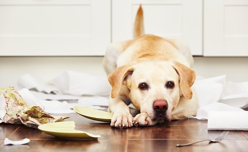 how to treat dog colitis