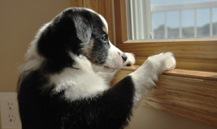 How to cure separation anxiety in dogs uk