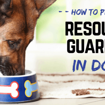 resource guarding in dogs