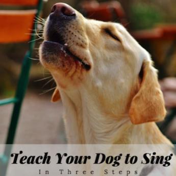 teaching dog to sing