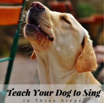 teaching dog to sing