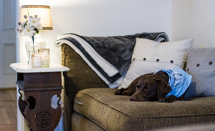 Best Couch Covers For Homes With Dogs