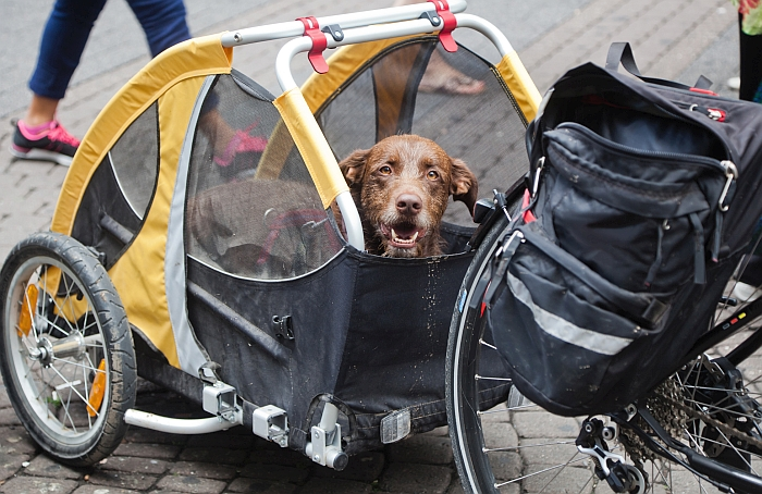 5 Best Dog Bike Trailers For Towing Your Buddy On Your Bicycle