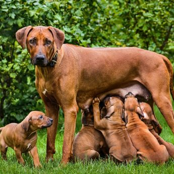 bottle-feeding-puppies