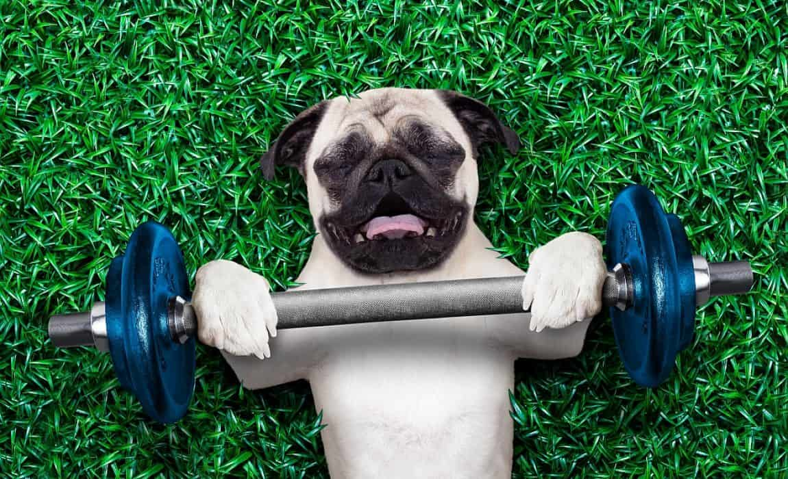 Build Your Dog's Muscles