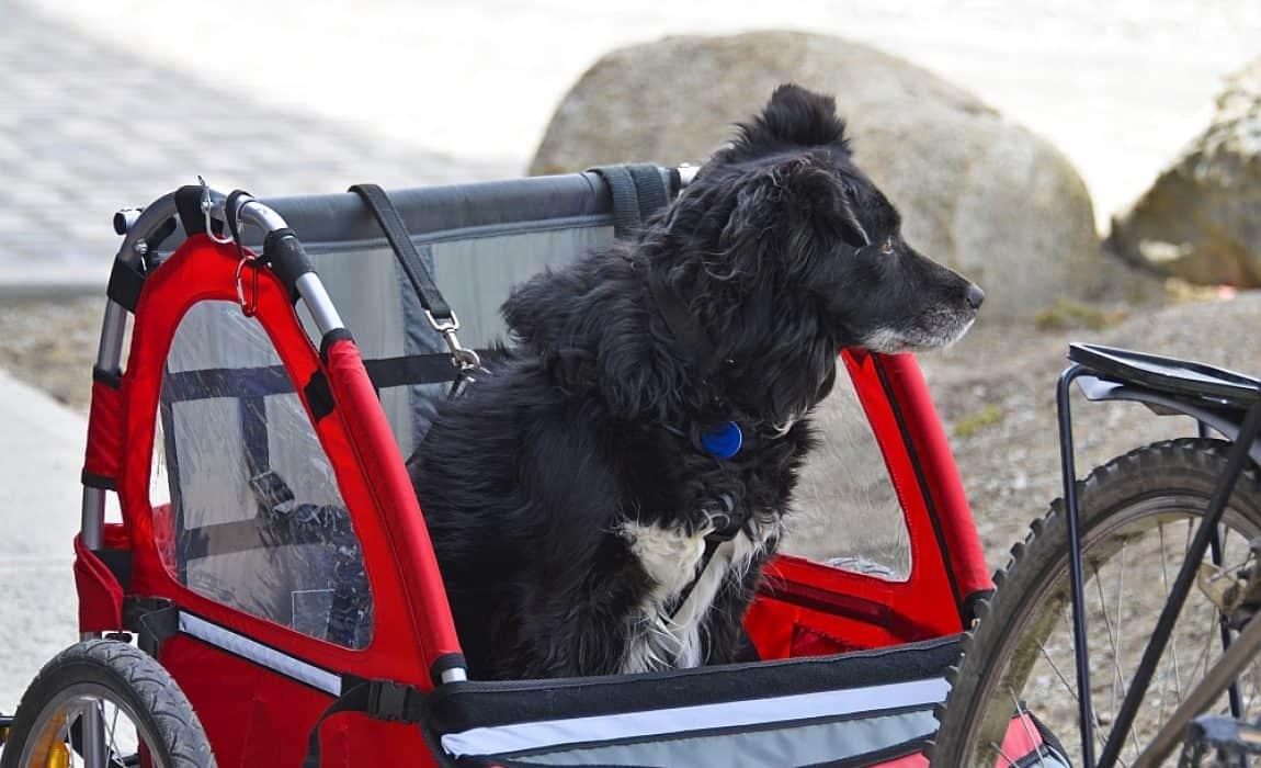 Dog-Bicycle-Trailer