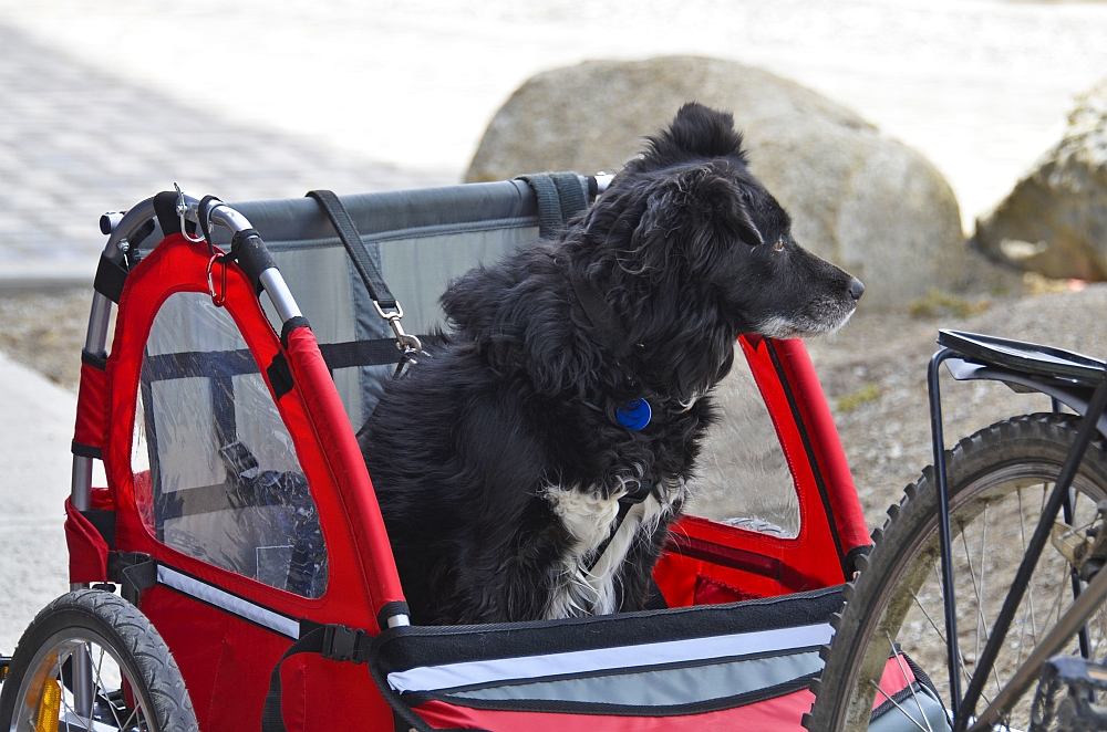 5 best dog bike trailers for towing your buddy on your. Black Bedroom Furniture Sets. Home Design Ideas