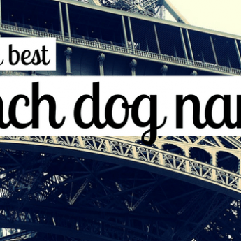 french dog names