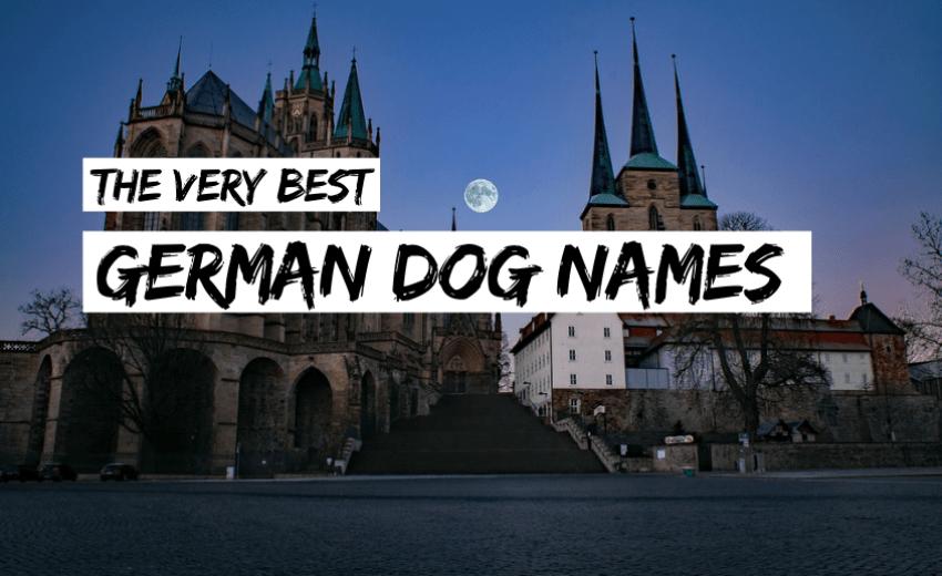 german-dog-names