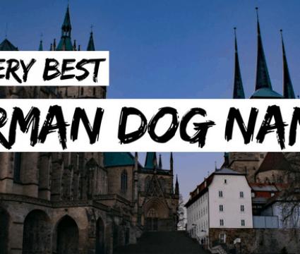 130+ Italian Dog Names: The Perfect