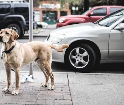 most loyal dog breeds