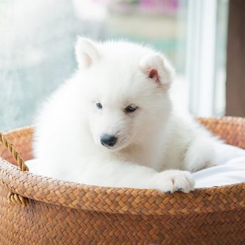 wicker-beds-for-dogs