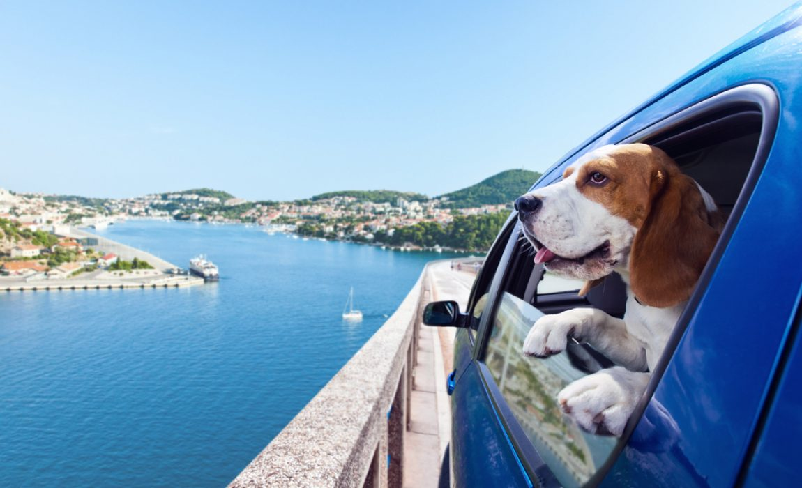 best dogs for traveling