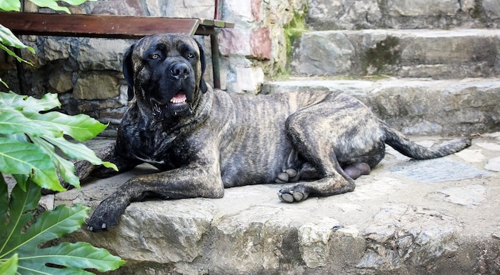 Most intimidating dog breeds dating site for young women looking for older men