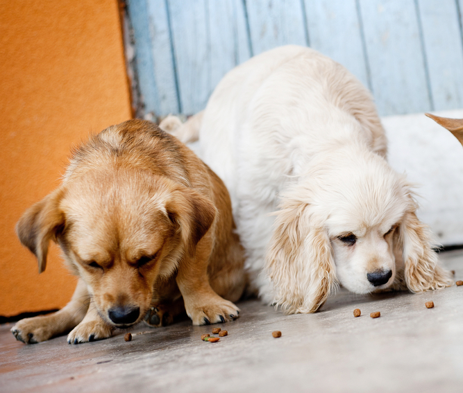 Why you should throw away your dog 39 s food bowl start Dog will eat out of hand but not bowl