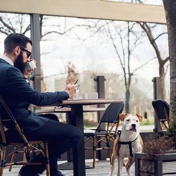 dog-friendly-restaurant-chains
