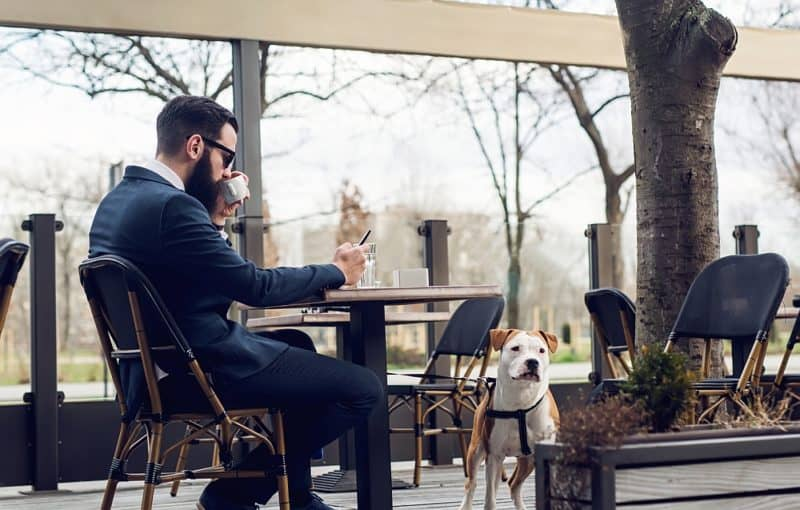 dog-friendly-restaurant-chains