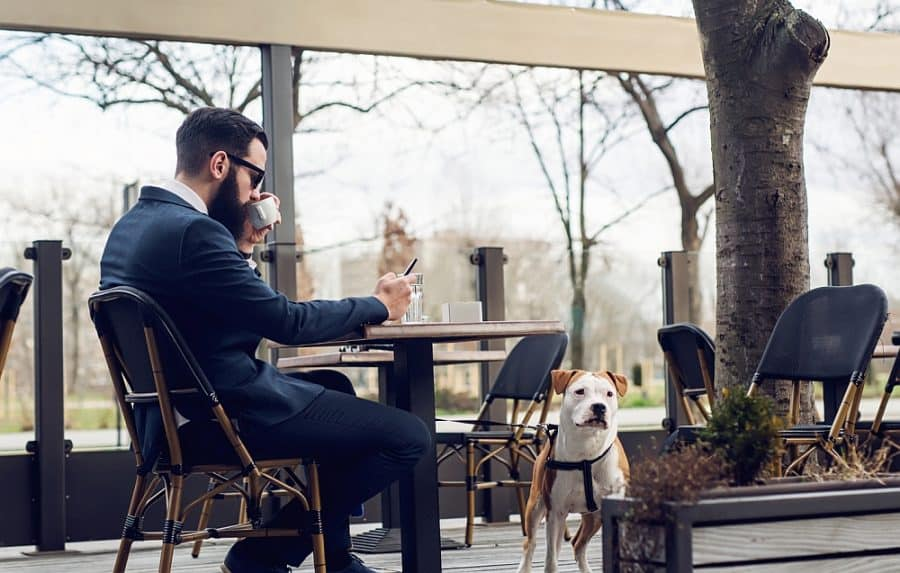 15 Dog Friendly Restaurant Chains: Dining Out with Your Dog!