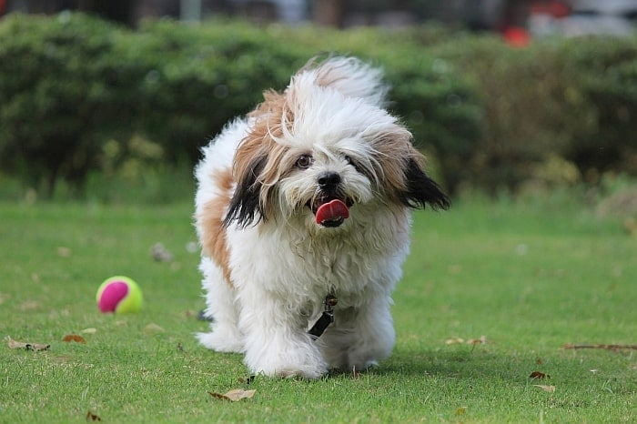 dogs-who-live-long-lives