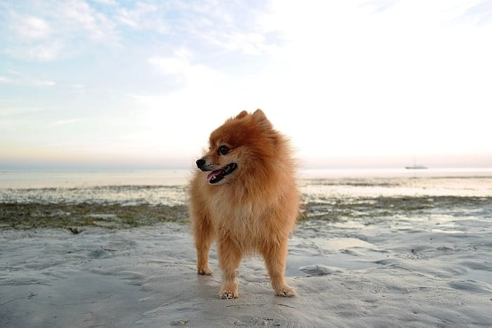 dogs-who-live-longest